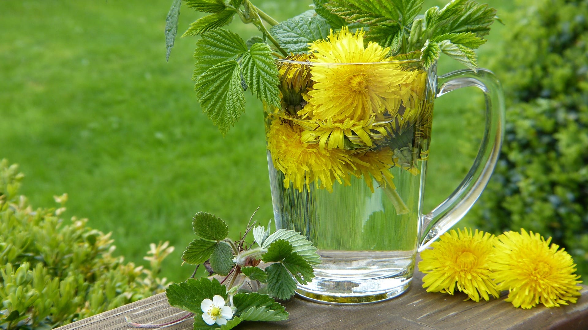 Is dandelion tea safe to drink